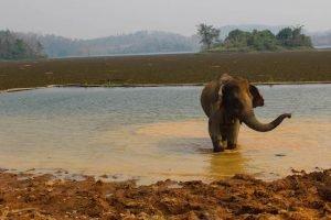 Elefanten Laos