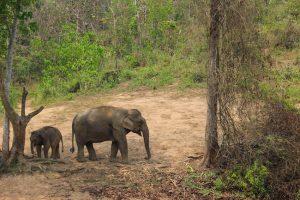Elefanten in natürlicher Umgebung Laos