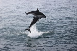 Dolphin Encounter Neuseeland