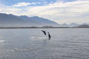 Delfine in Neuseeland